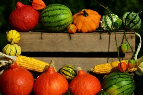 pumpkin, still life, corn, autumn, food, organic, agriculture, colorful