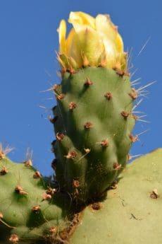 flóry, pouště, příroda, ostré, kaktus