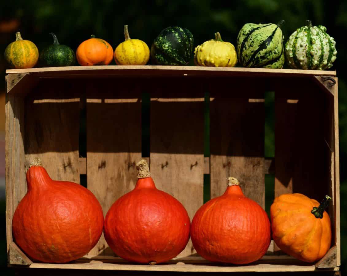 calabaza, otoño, cajón, alimentos, vegetales, luz natural, decoración