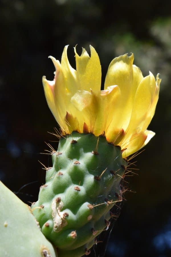 spike, nature, sharp, cactus, flower, desert, flora, leaf