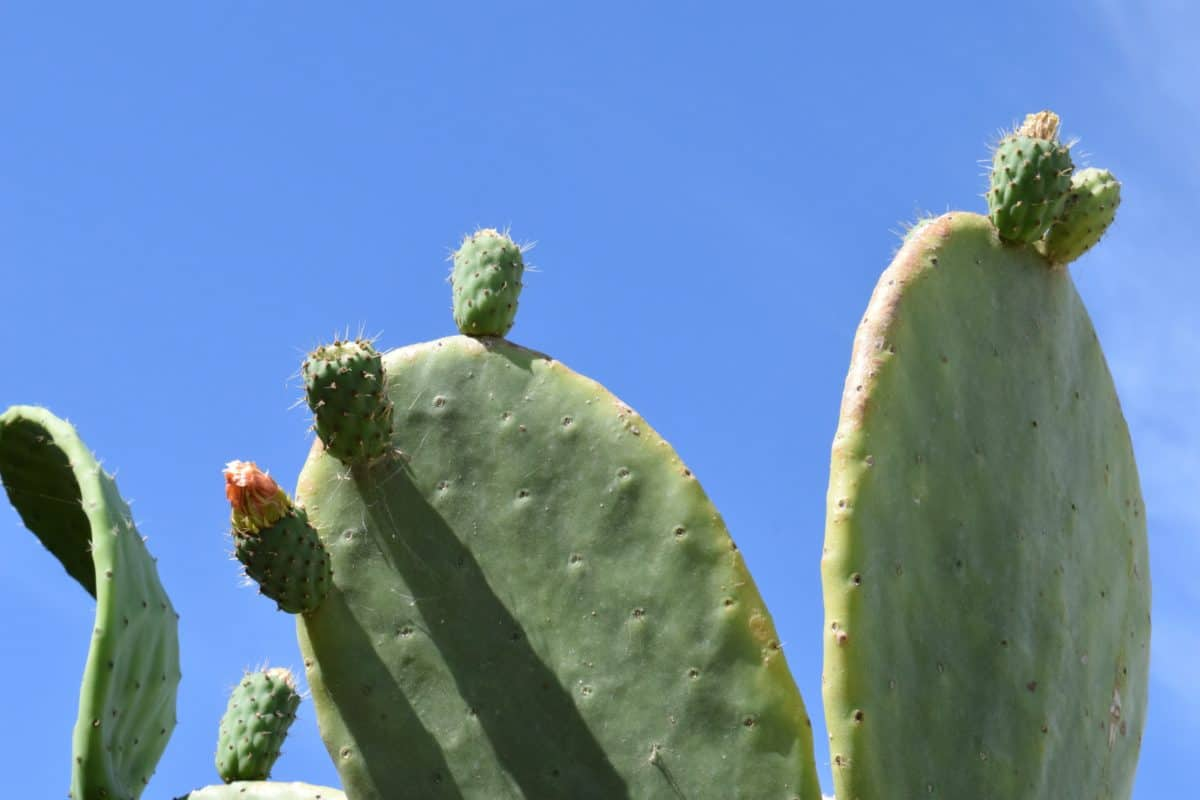 nature, sky, cactus, sharp, flower, desert, flora