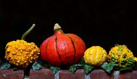 citrouille, légumes, nourriture, feuilles, automne, décoration colorée, plante,