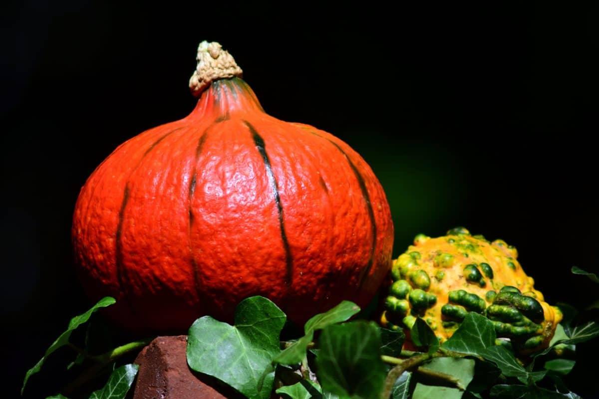 vegetal, escuridão, ainda vida, comida, vermelho, folha, abóbora, outono