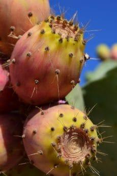Spike, jardin, flore, cactus, désert, sharp, nature