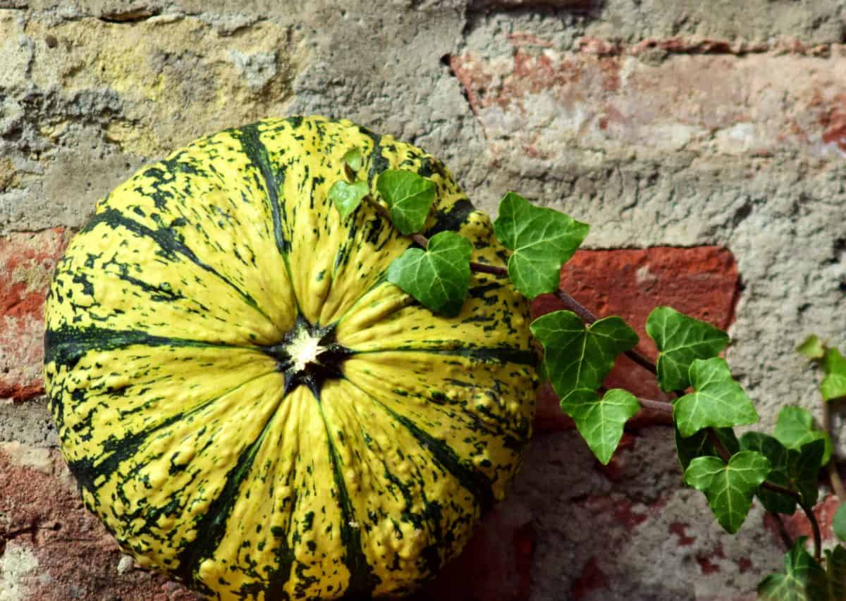 flora, nature, vegetable, detail, colorful, pumpkin, leaf, food, autumn
