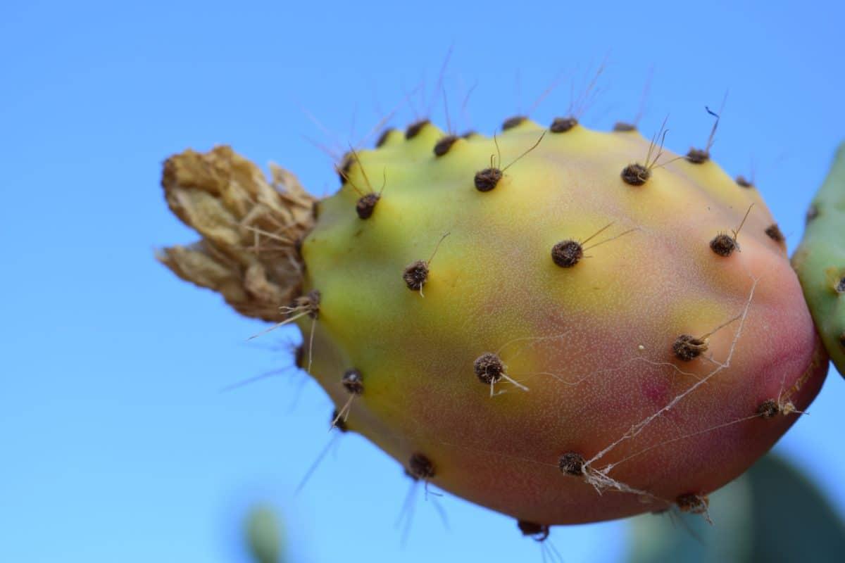 flore, nature, cactus, désert, sharp, plante, ciel