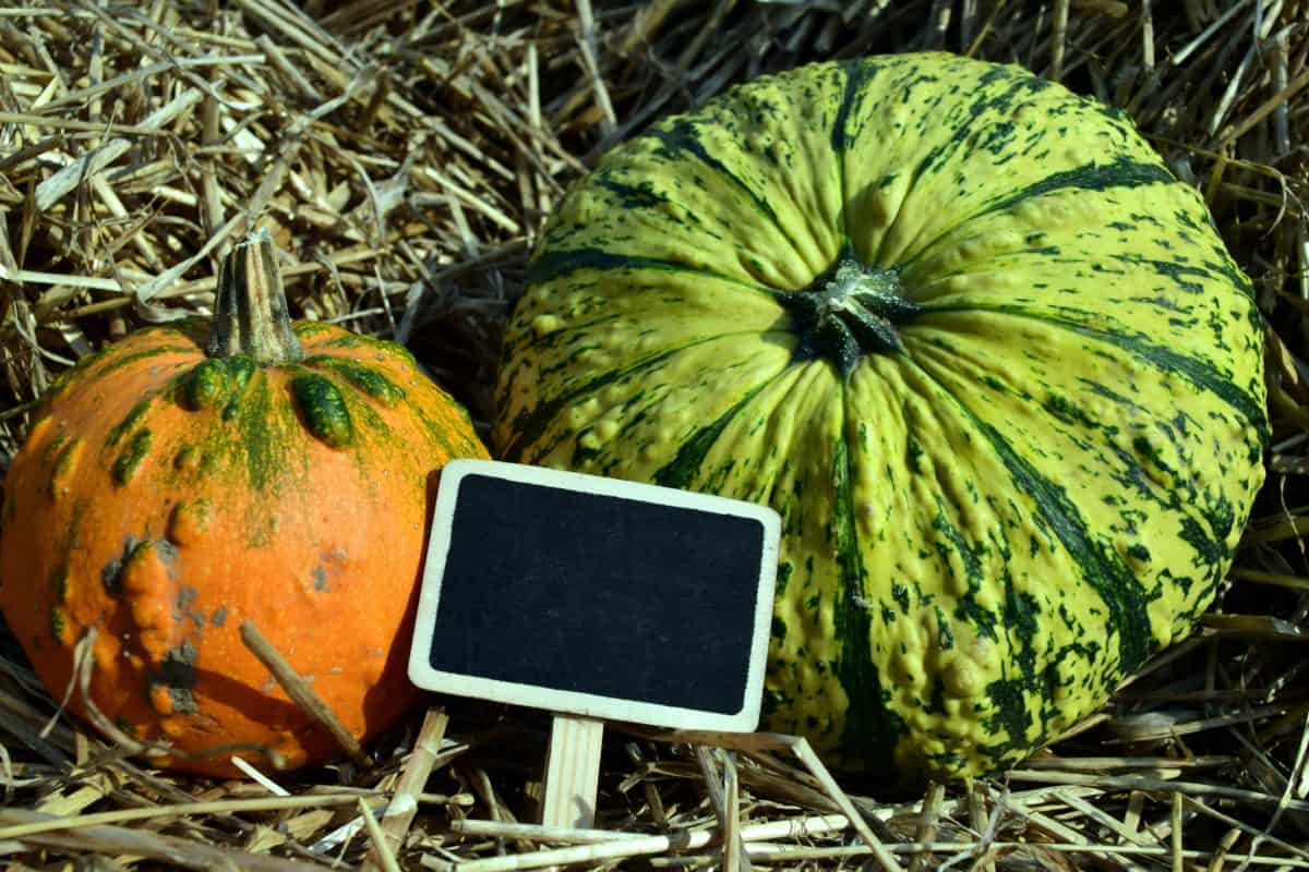 food, pumpkin, vegetable, straw, flora