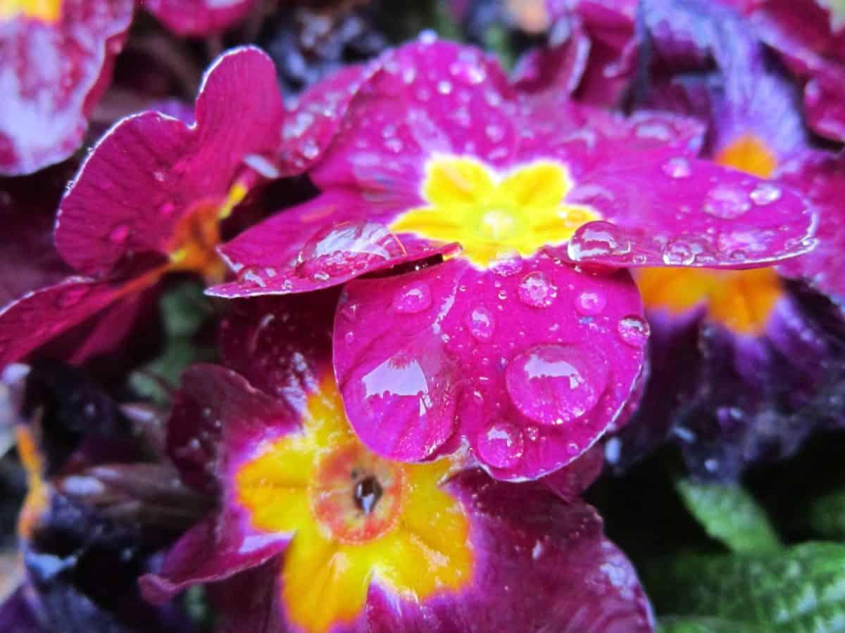 dauw, regendruppel, stamper, zomer, bloem, Tuin, natuur, blad, flora, bloemblaadje, kruid