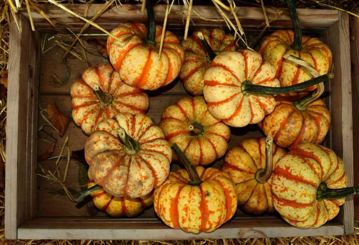 mercado, alimentos, otoño de calabaza, de interior, hortalizas,