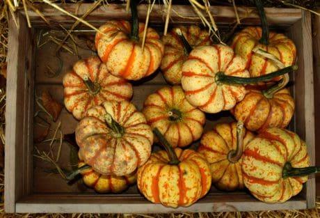 marché, alimentaire, citrouille, intérieur, légume, automne