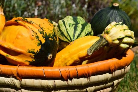 food, nature, vegetable, pumpkin, autumn, garden