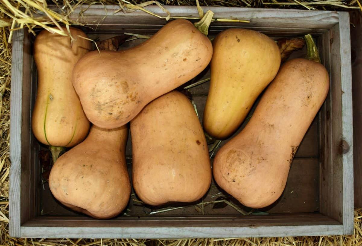 marché, des denrées alimentaires, l'agriculture végétale, citrouille,