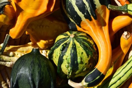 colorful, nature, vegetable, agriculture, pumpkin, autumn, food