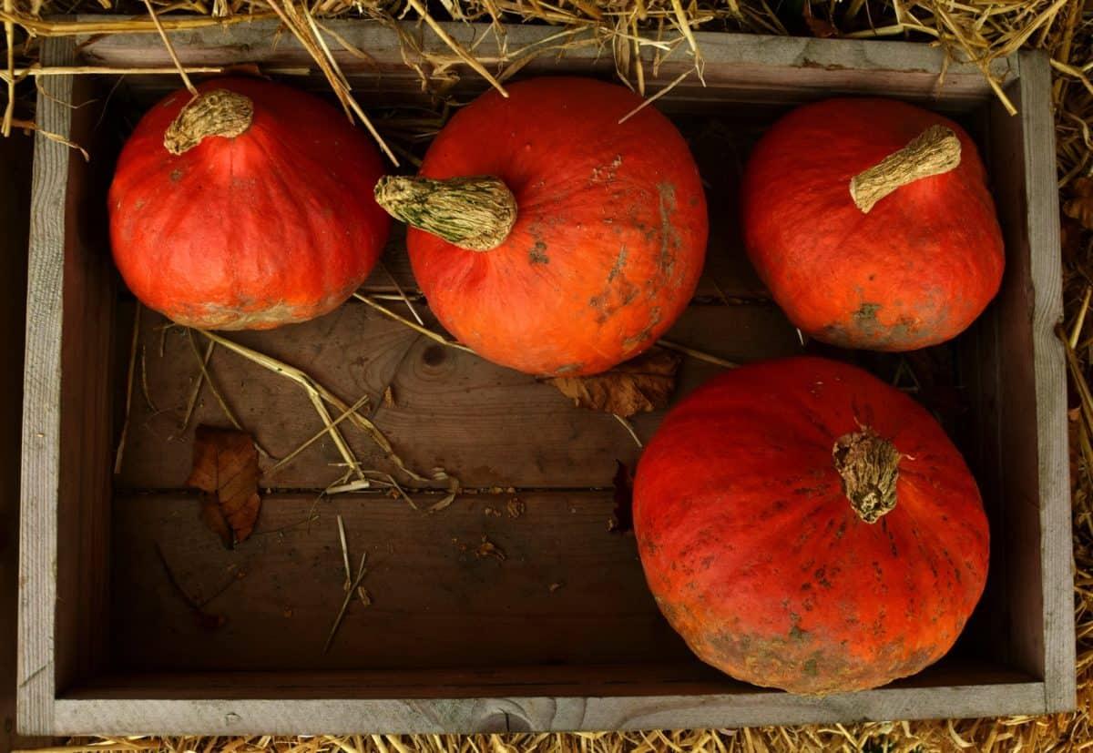 zucca, mercato, cibo, verdura, autunno