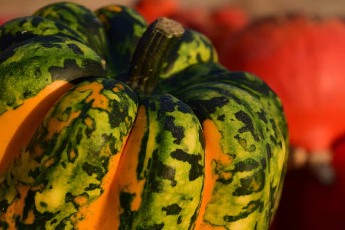 citrouille, alimentaire, légumes, nature, automne