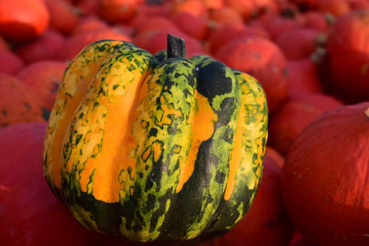 vegetable, food, macro, detail, colorful, agriculture, pumpkin, autumn, nutrition
