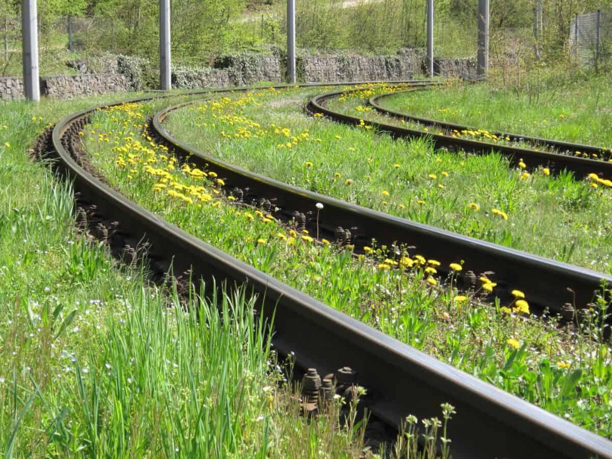 ferrocarril, metal, hierba, transporte, flor