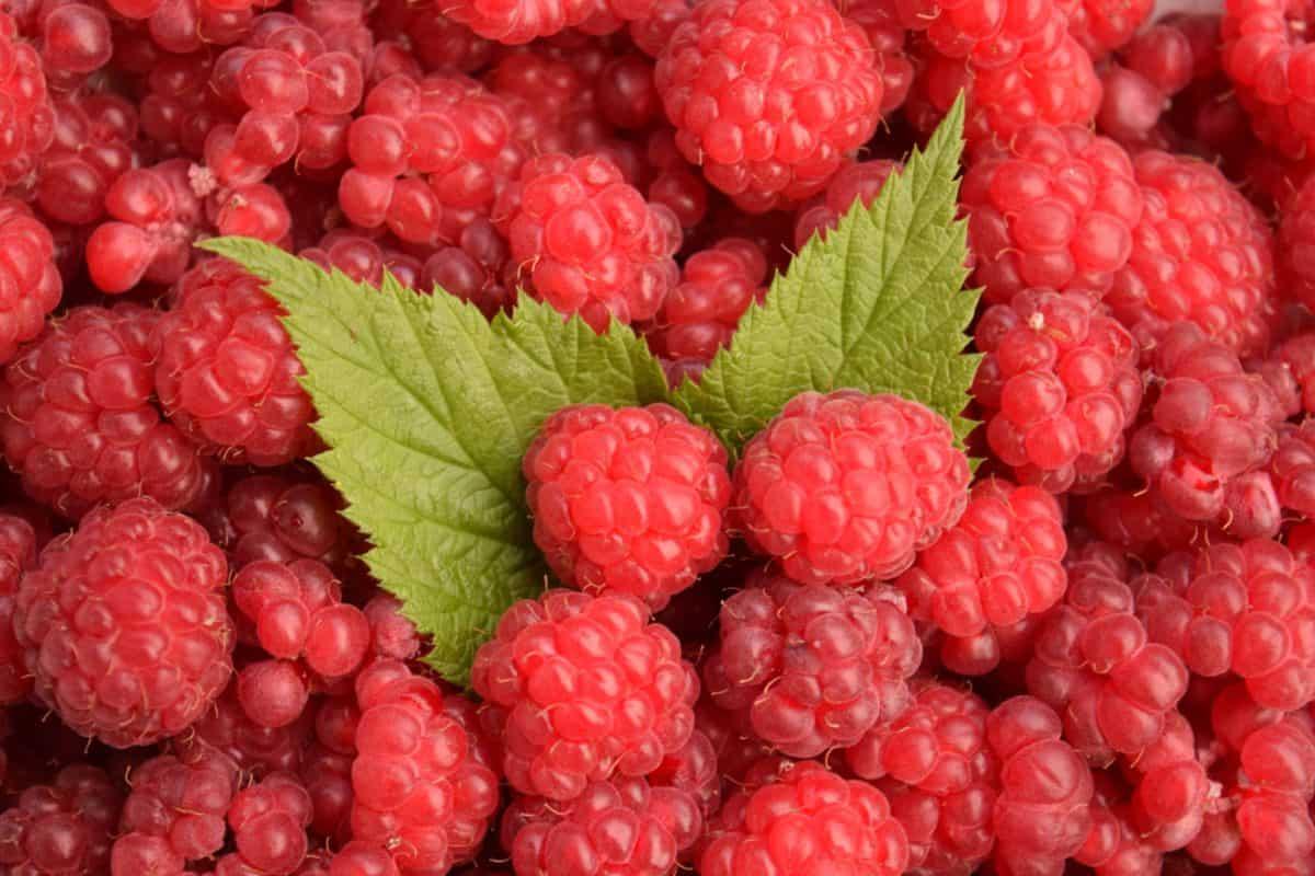 dolce, cibo, lampone, bacche, frutta, dessert, rosso, macro, dieta, delizioso