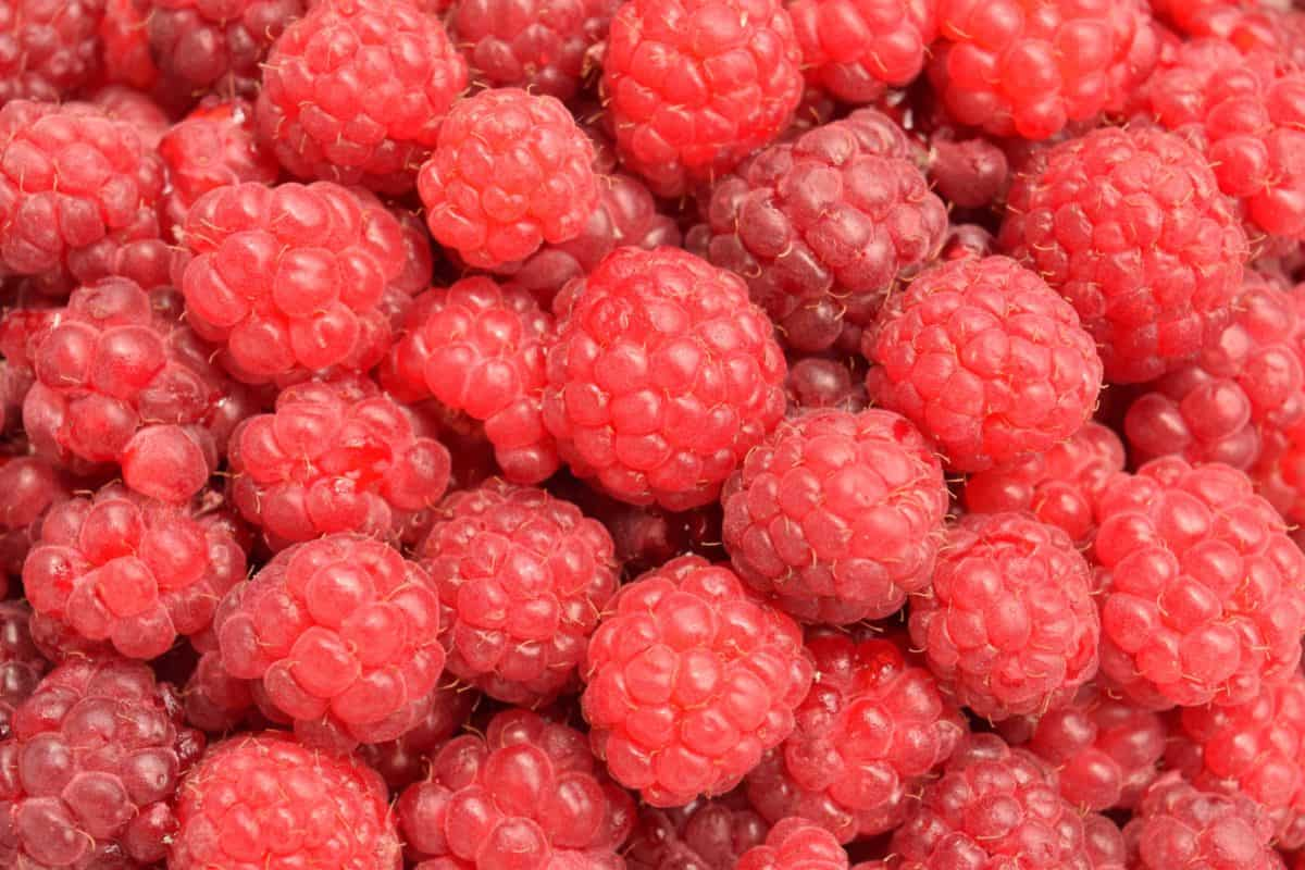 berry, red, raspberry, delicious, diet, sweet, fruit, food, dessert