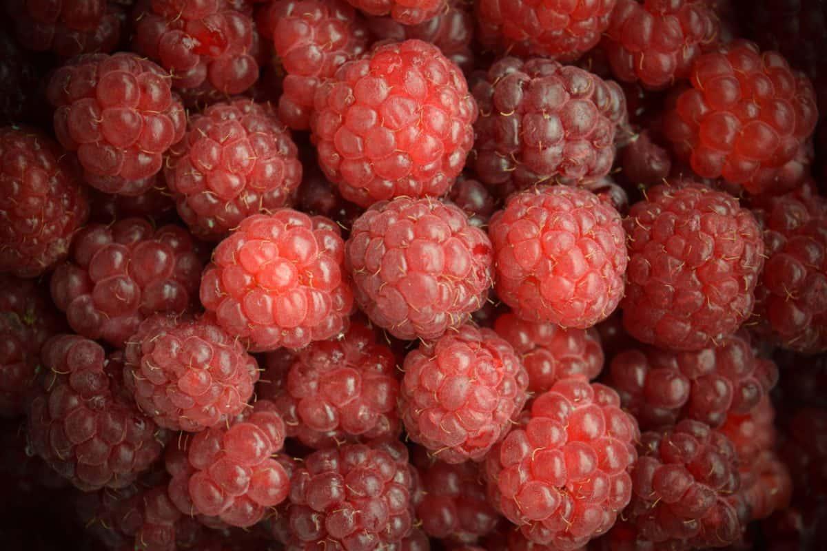 framboise, sweet, baies, fruits, délicieux, cuisine, dessert