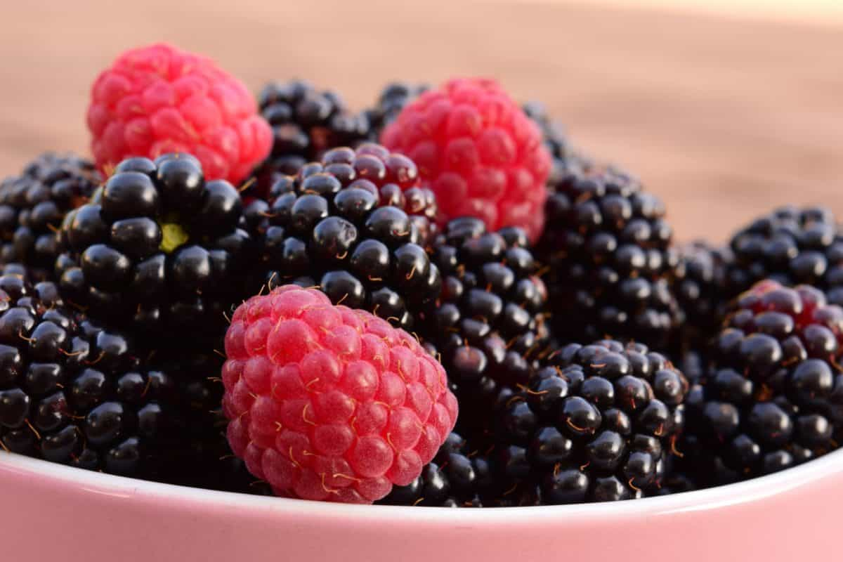blackberry, fruit, sweet, food, berry, raspberry, dessert