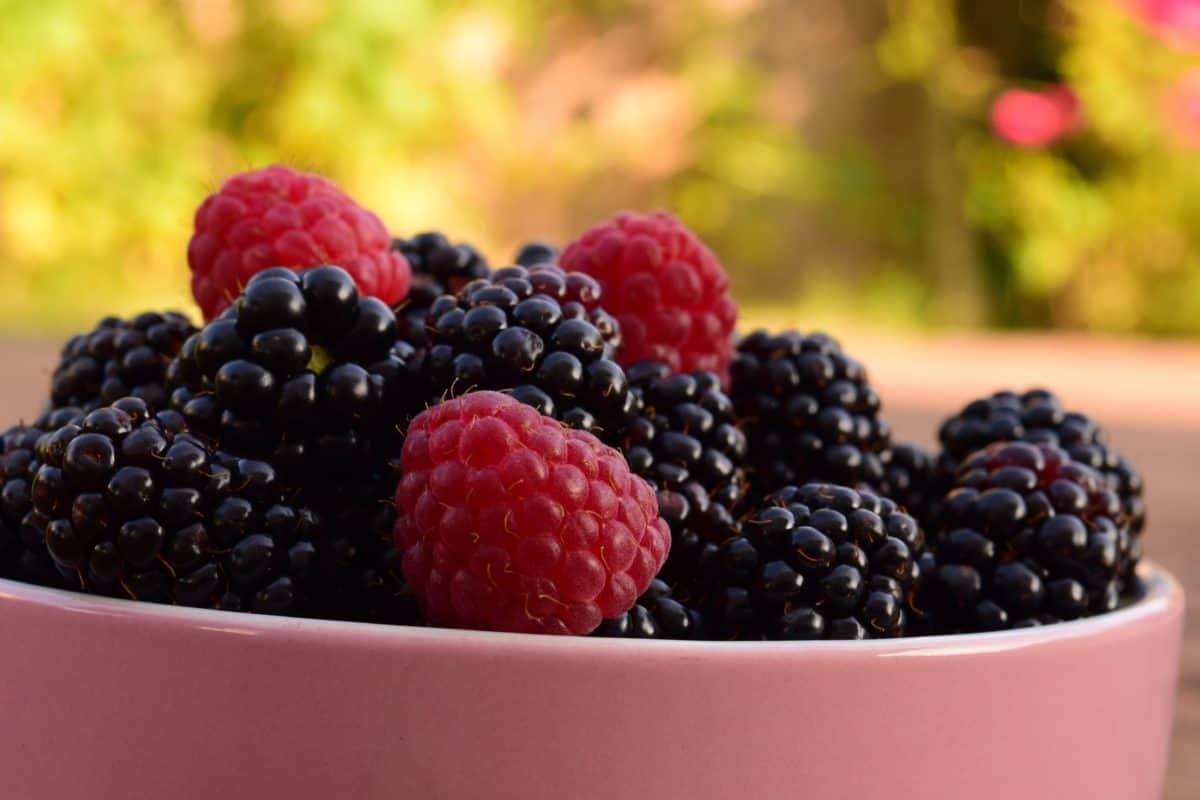 berry, bowl, fruit, food, blackberry, sweet, raspberry, dessert