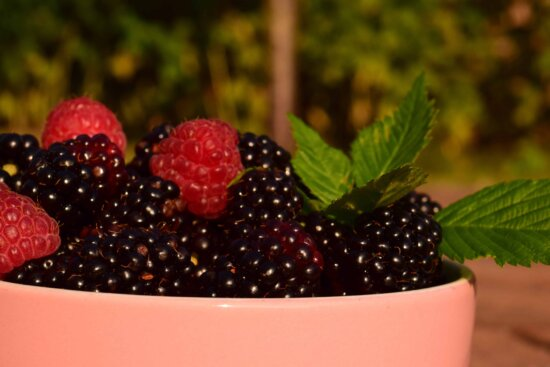 sweet, berry, food, raspberry, delicious, blackberry, fruit, bowl, outdoor