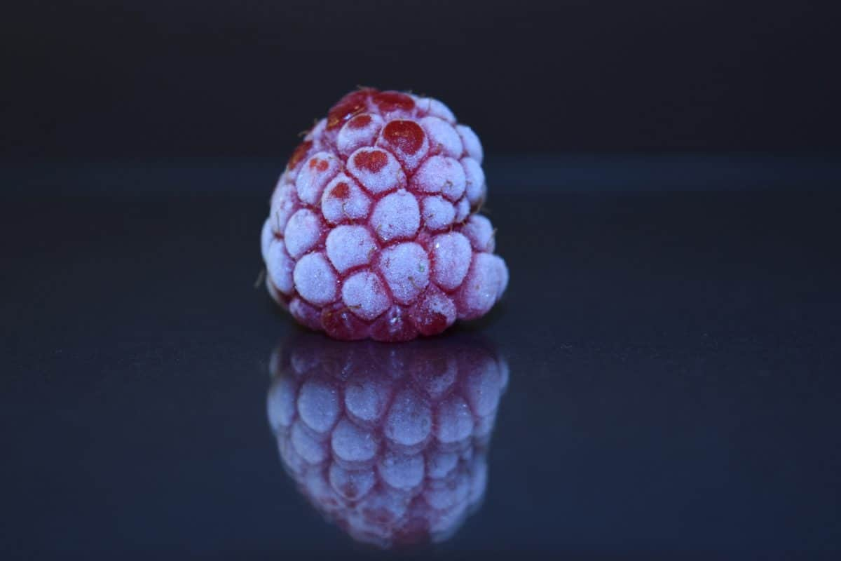 raspberry, macro, detail, darkness, reflection, fruit, frozen, ice, cold