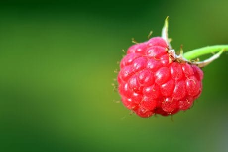 nature, fruit, berry, macro, raspberry, sweet, dessert