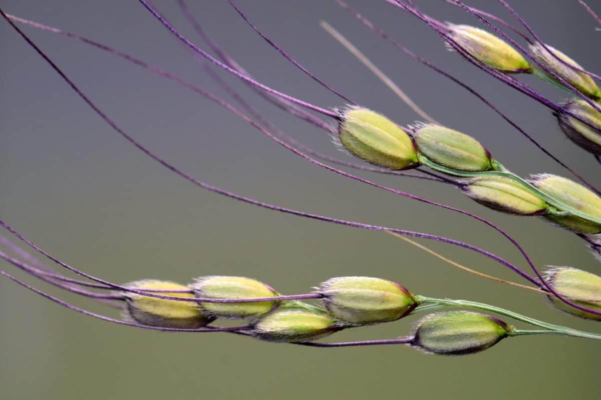 plant, flora, macro, detail, Tuin, groen, zaad