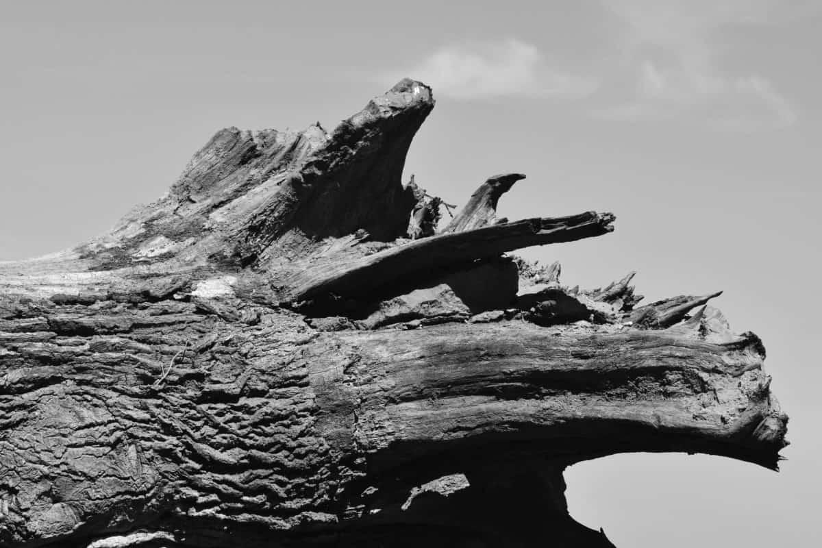 seco, viejo, cielo, madera, monocromo, luz del día