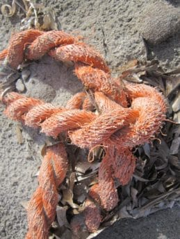 rope, sand, object, shore, object, red