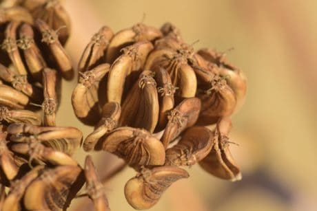 seed, macro, detail, brown, herb, daylight
