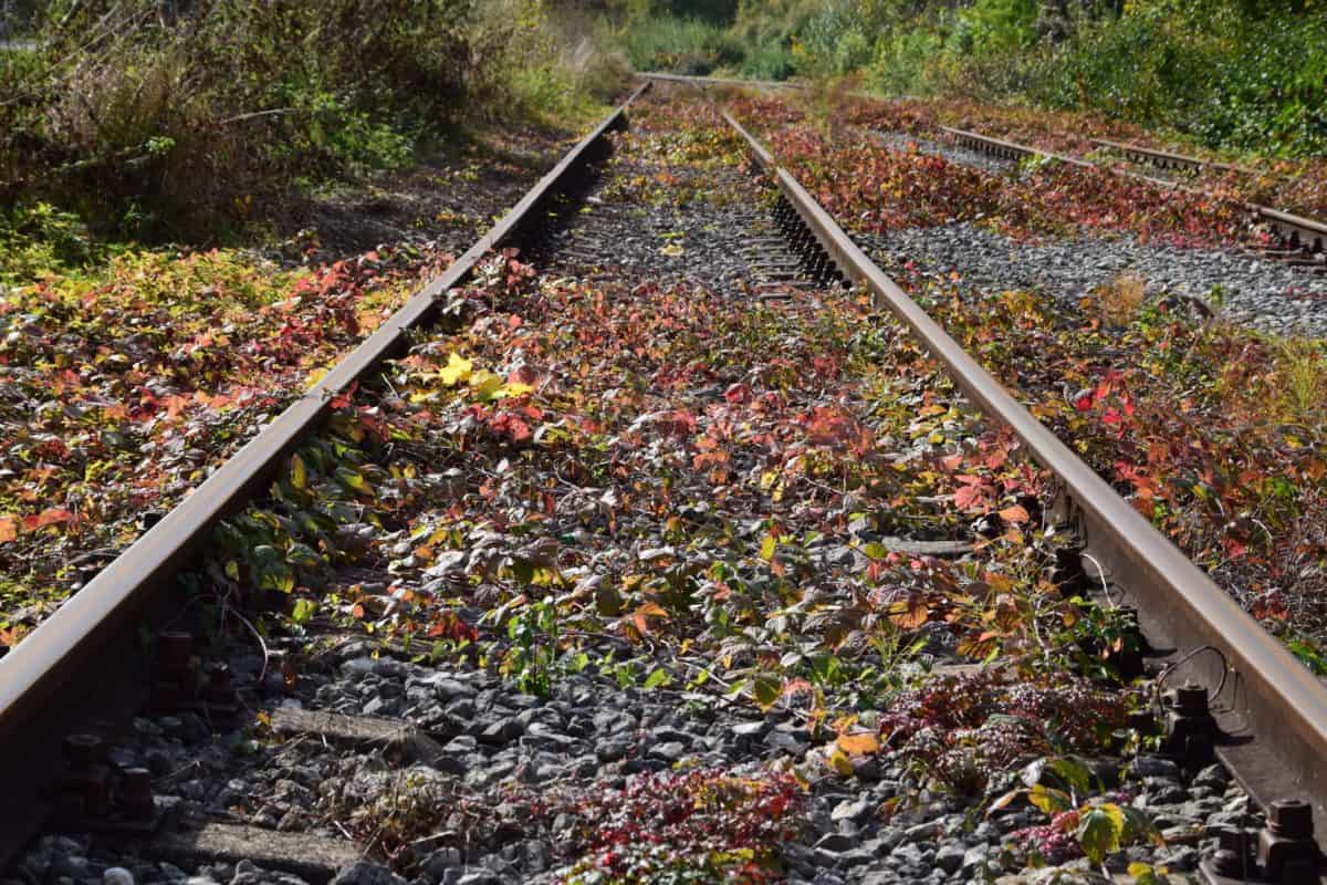 railroad, stone, bush, nature, grass, outdoor, autumn