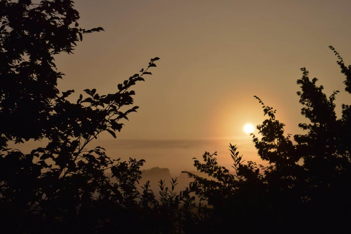 paesaggio, silhouette, tramonto, sole, albero, cielo