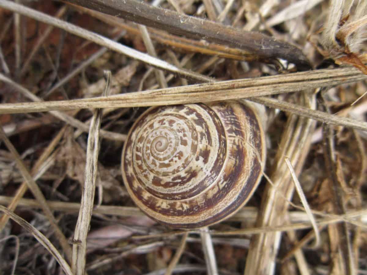 Thiên nhiên, gastropod, cỏ, vỏ, ốc, động vật không xương sống