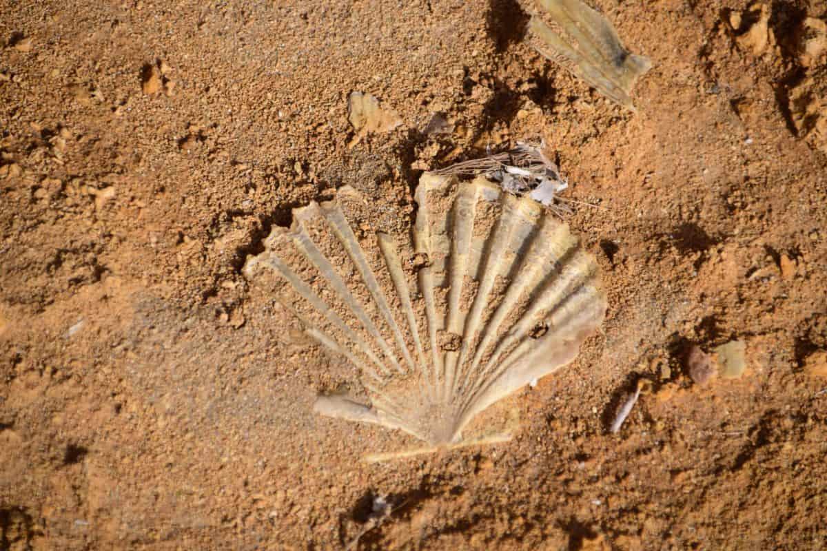 Shell, spiaggia, sabbia, deserto, struttura, terreno