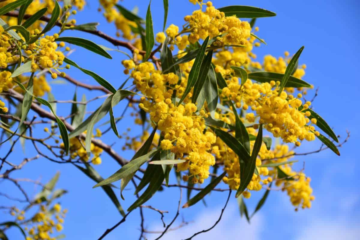 garden, flower, flora, nature, branch, leaf, tree, plant