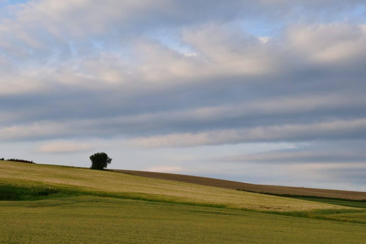 Prado, colina, agricultura, luz, paisaje, pasto, cielo