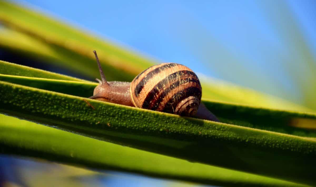 蜗牛,植物,花园,草,自然,大象,动物ak47能杀叶子