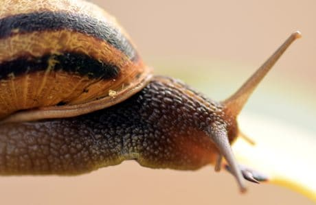 escargot, détail, animaux, nature, invertébré, macro