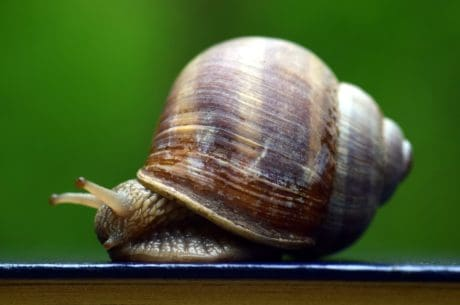 snail, shell, nature, animal, invertebrate, brown
