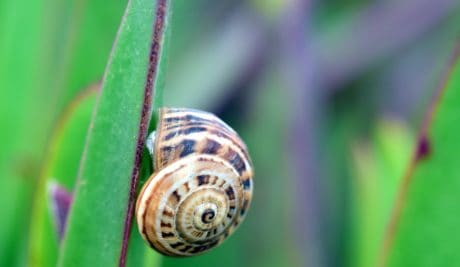 nature, flora, snail, shell, garden, invertebrate, leaf