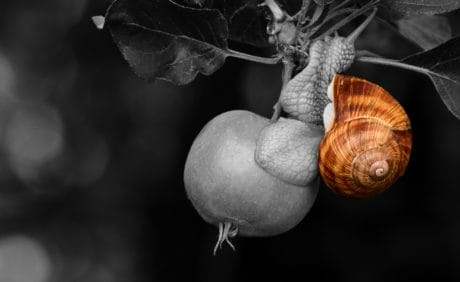 escargot, animal, brun, fruit, jardin, nourriture, coquille, nature
