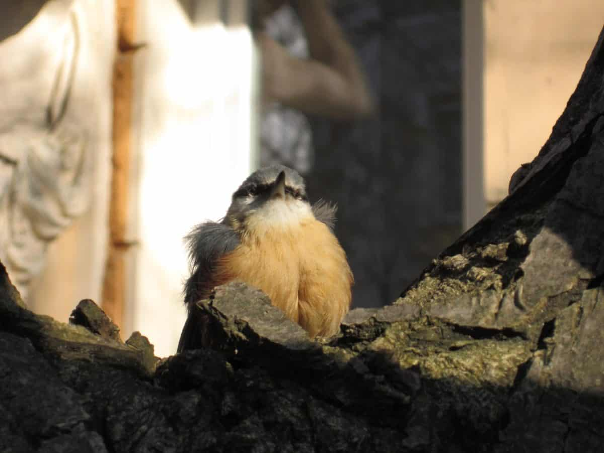 wildlife, bird, wild, beak, feather, outdoor