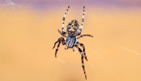 nature, spider, invertebrate, animal, insect, arthropod