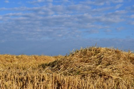 cereal, straw, agriculture, field, summer, daylight, blue sky, landscape