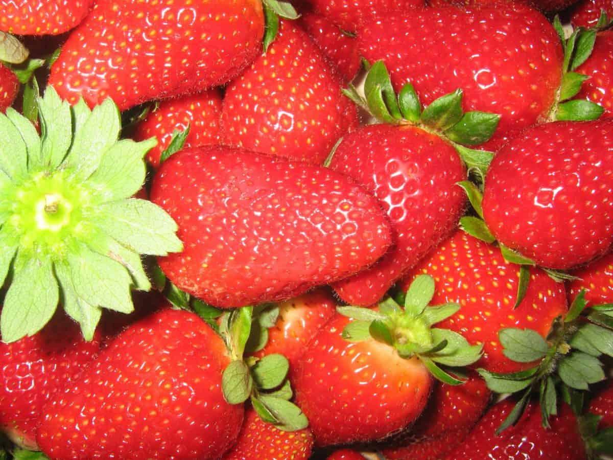 Berry, nutrisi, merah, lezat, manis, stroberi, daun, makanan, buah