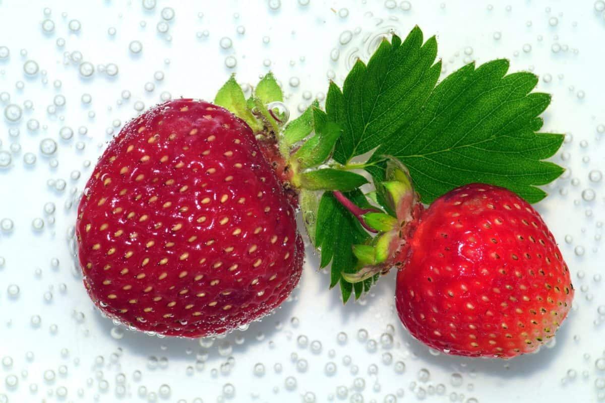alimentation, doux, berry, fruits, délicieux, feuille, nourriture, fraise