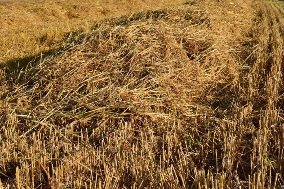 field, agriculture, nature, straw, dry, cereal, summer, grass